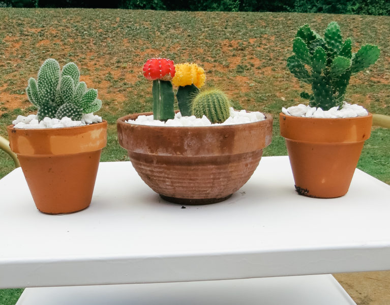 cactus flower pot garden